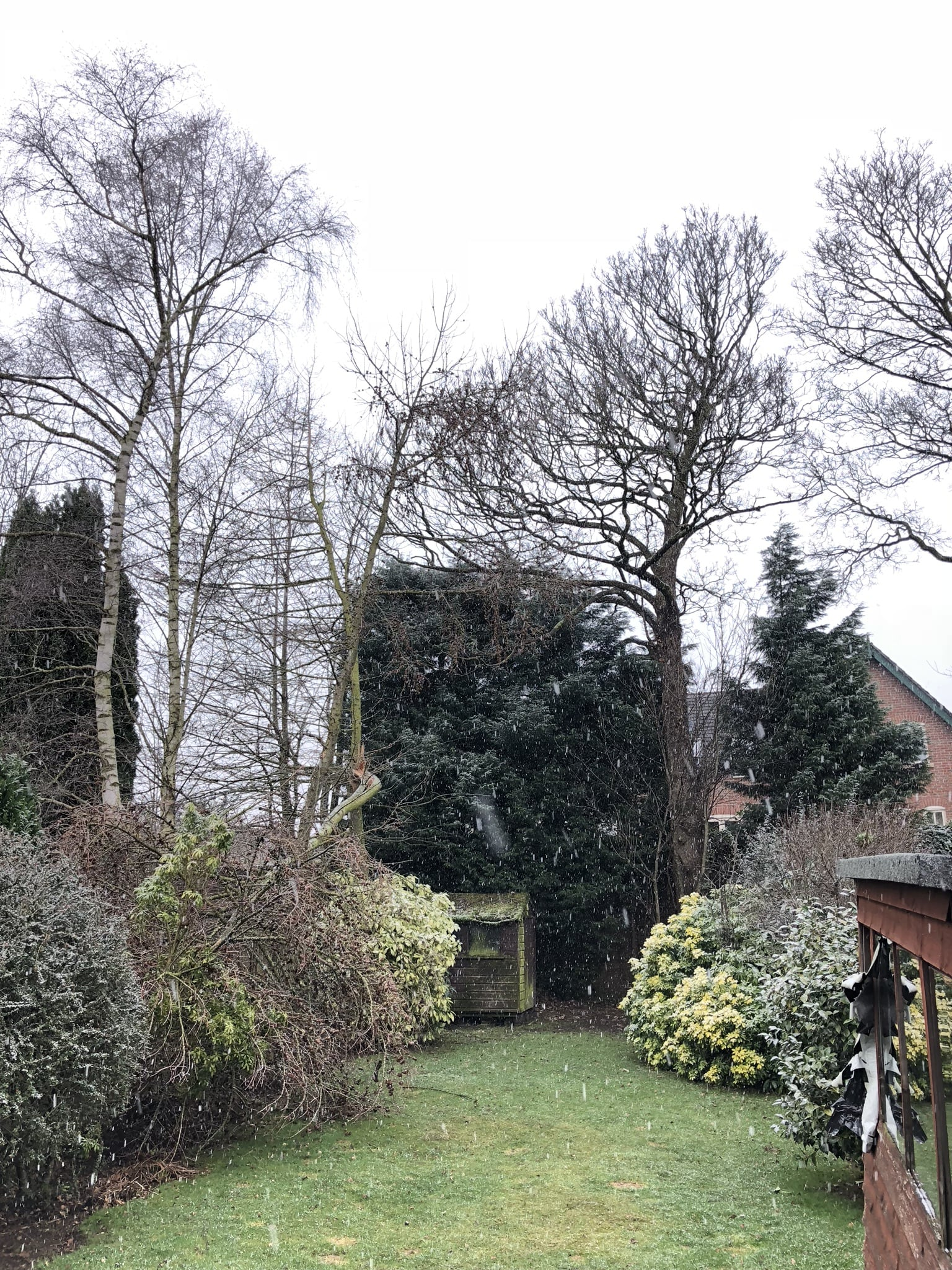 Conifer tree reduction and pruning